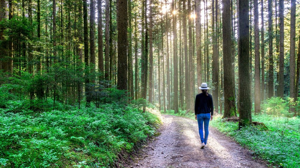 Forest bathing helps to heal a broken heart